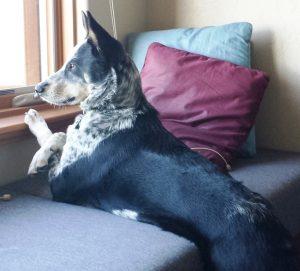 Max, watching window TV