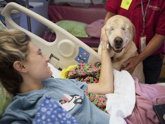 Blind dog visits girl in hospital
